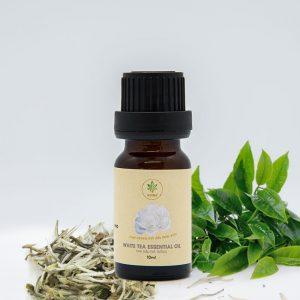 Công dụng của tinh dầu trà trắng nguyên chất